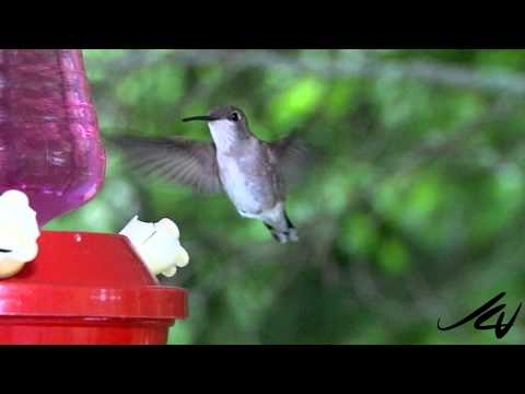 Our Hummingbird Video and Daily Planet on Discovery Channel in Canada  - YouTube