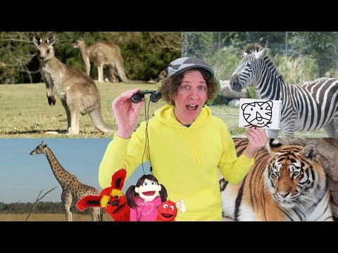 Where Is The Tiger? Song with Matt | Safari Animals | Sing, Draw, and Write # 2 | Learn English Kids