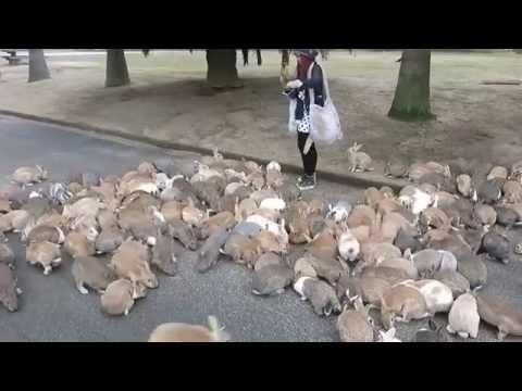 A Bunny Lover's Paradise: Exploring Okunoshima, Japan's Rabbit Island