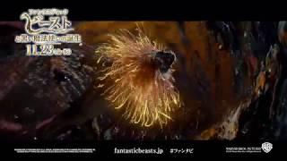 映画『ファンタスティック・ビーストと黒い魔法使いの誕生』魔法ワールド編6秒【HD】2018年11月23日(金・祝)公開 thumbnail