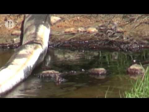 Nacional | Pescadores oaxaqueños denuncian que contaminación en el agua es culpa de Pemex