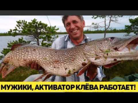 активатор клёва fishhungry видео