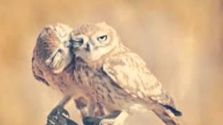 Моя любовь к совам!!! :-)