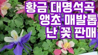 야생화판매 화초 가드닝  공기정화식물 베란다식물 앵초 …