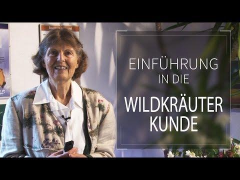 Einführung in die Wildkräuterkunde | Kräuter- und Kochwerkstatt