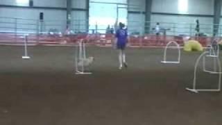 K9 Sports Nadac Trial May 09