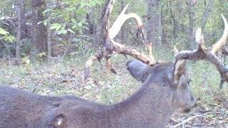 Bullwinkle Shot in the Antler