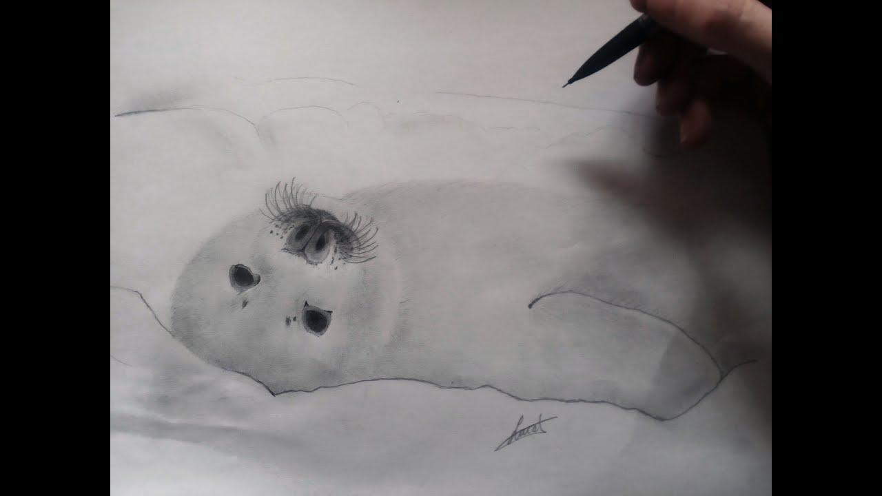 Comment Dessiner Un Bébé Phoque (débutant)