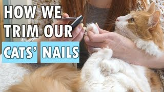 How we trim our cats' nails