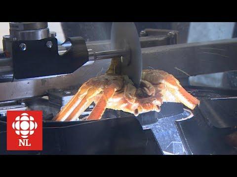 Can robots process crab?