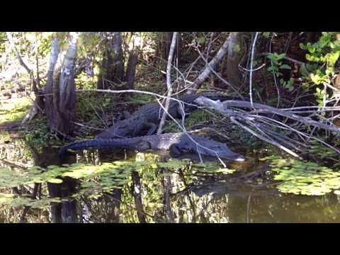 Tamiami Trail Alligator Alley Everglades Florida Route 41 HD