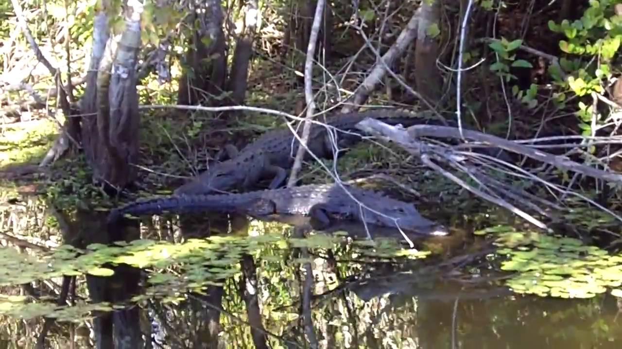 Tamiami Trail Alligator Alley Everglades Florida Route 41 Hd Youtube