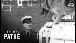 Training Raf Police Dogs (1950)