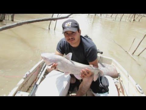 Yo Yo Fishing Reel In Action