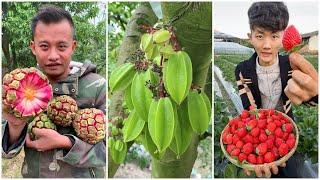 😍Farm Fresh Ninja Frขit   Tik Tok China   (Oddly Satisfying Fruit Ninja) #50