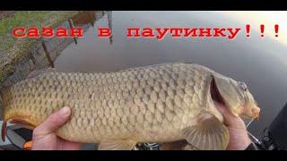 РЫБАЛКА НА СЕТИ Рыбалка на Амуре САЗАН