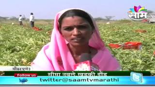 Sudam Navale's watermelon success story