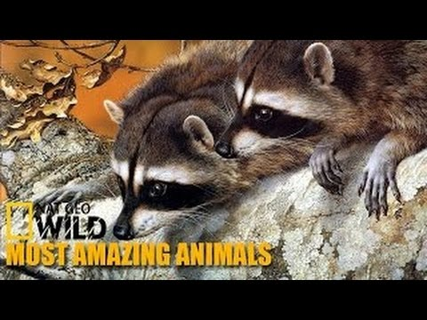 National Geographic Documentary HD 2015 Most Amazing Animals Part 6