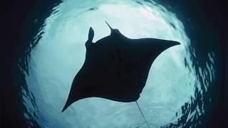 10 حقائق تثبت إن المحيط مكان مرعب .!