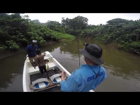 River Critters Of The Solomon Islands