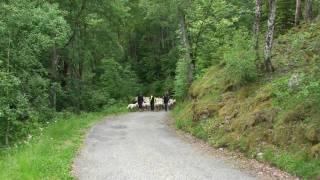 Transhumance à travers le Valgaudemar