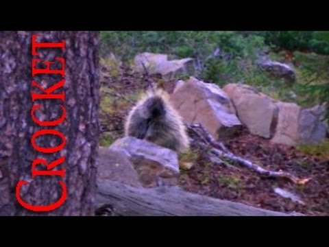 Curious Little Feller - The Range Part 3