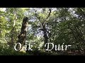 Learn the Ogham :  Oak - Duir