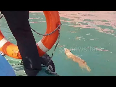 Swimming Dog Rescued after Hour Long Chase
