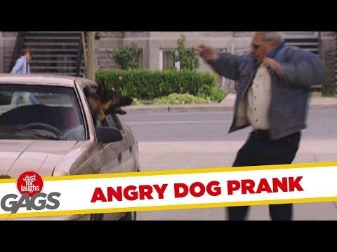 JFL Prank: Angry Dog Gag