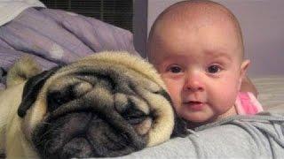 สุนัขและทารกเป็นเพื่อนที่ดีที่สุด - รวบรวมน่ารักและตลก