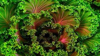 Kale: 13 Impressive Health Benefits  Health And Nutrition