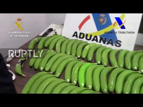 Spain: Drug dealers busted transporting cocaine inside fake bananas