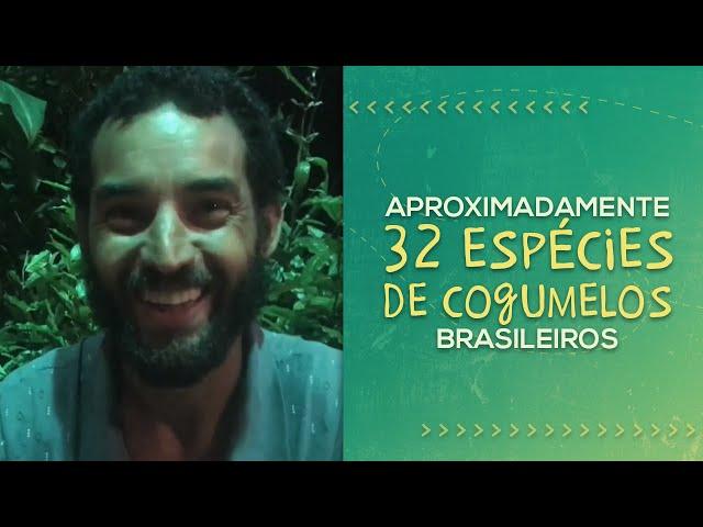 COGUMELOS NA AGROFLORESTA // Jorge Ferreira // PorQueNão?