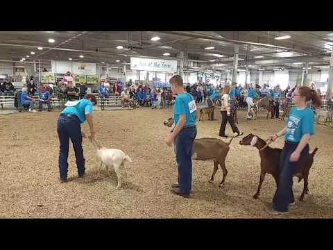 2017 Lancaster County Super Fair - 4-H Dairy/Pygmy Goat Show (entire show)