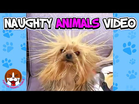 Naughty Animals Funny Things That Will Make You Laugh 🐱 Cute Animal Videos To Cheer You Up 🐶 #02