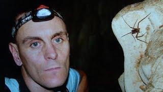 Höhlentaucher warnt vor übereilter Rettungsaktion in Thailand