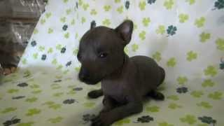 http://life-with-dog.net/koinuhanbaijoho/tyaikure.html 埼玉県のトッ...