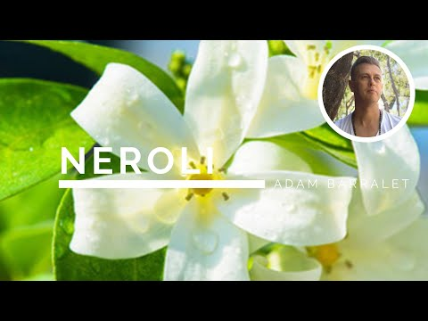 neroli---the-oil-of-intimacy