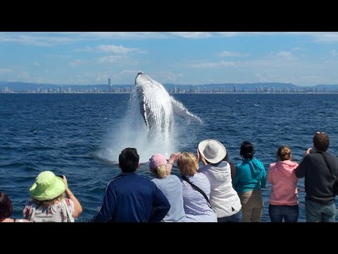 Gold Coast Whale Watching With Whale Watch Australia
