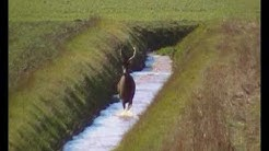 Chasse à Courre au Cerf en Eure et Loir dans la forêt de Senonche