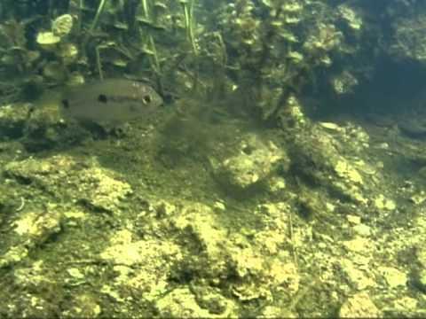 Exotic Fish Species In South Florida: Waterways:
