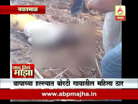 Gaon Tithe Majha@730AM Yavatmal: Tiger killed woman :02:06:2016
