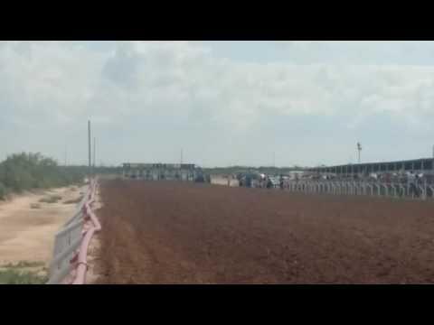 Carrera de caballo an odessa tx.