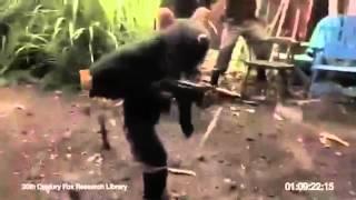 La scimmia viene armata e inizia a sparare !