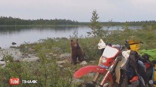 Медведи. Встреча с людьми.
