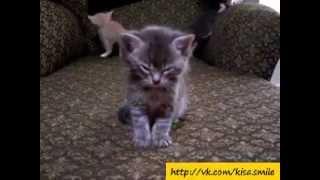 Маленький котенок спит стоя / Little kitten sleeping standing!
