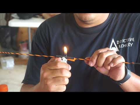 Tying Cat Whiskers on a bow string.