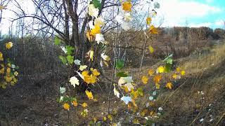 #осень #осень 2020 #природа  Красота природы Воронежской области!Осенний Лес,Река 2020