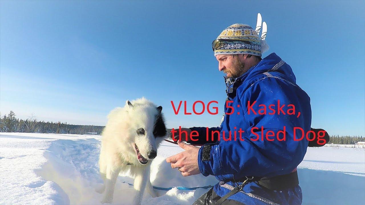 Breeding Our Sled Dogs!! • Dog Sled Saga: Return to the