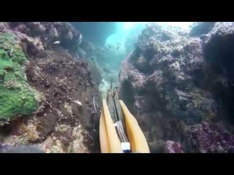 ดำน้ำยิงปลาแนวโขดหินในทะเลไม่ทันซักตัว Thailand Spearfish in the sea